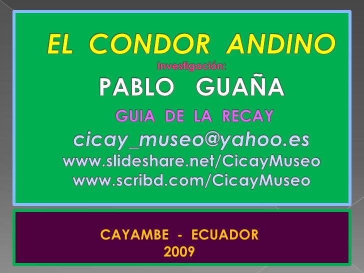 EL  CONDOR  ANDINOInvestigación: PABLO   GUAÑAGUIA  DE  LA  RECAYcicay_museo@yahoo.eswww.slideshare.net/CicayMuseowww.scri...