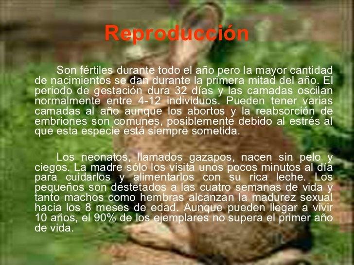 El Nuevo Conejo Feliz - 10 Reviews - Mexican - 1750 W