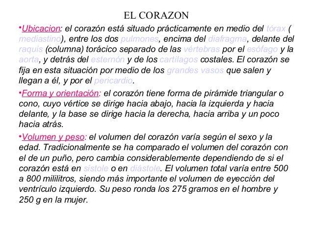 EL CORAZON •Ubicacion: el corazón está situado prácticamente en medio del tórax ( mediastino), entre los dos pulmones, enc...