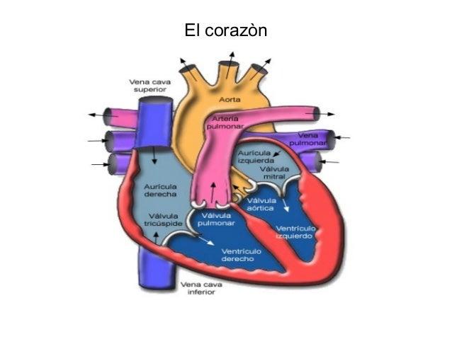 El corazon Slide 2