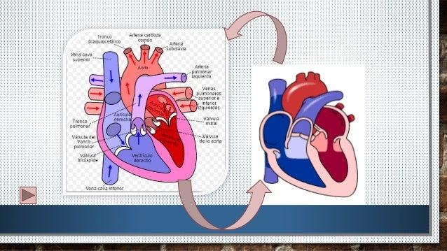 El corazon humano
