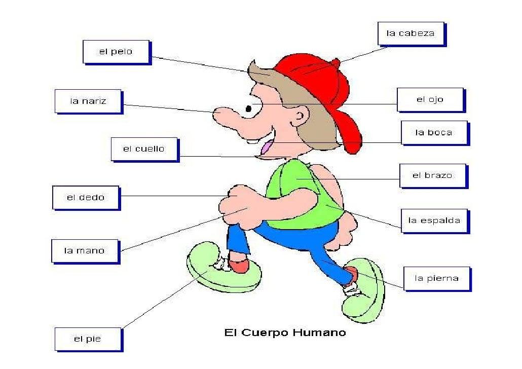 ELCUERPOHUMANO