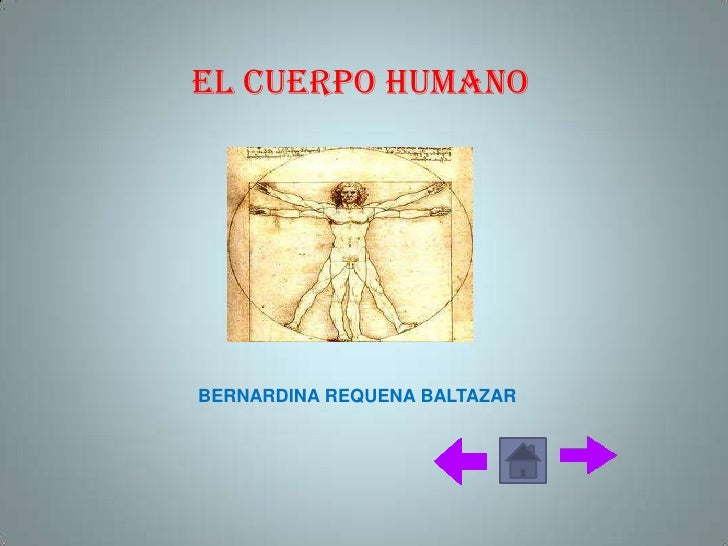 EL CUERPO HUMANOBERNARDINA REQUENA BALTAZAR