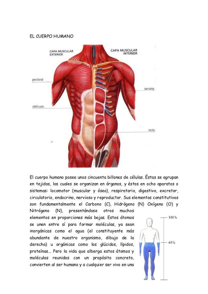 el-cuerpo-humano-1-728.jpg?cb=1328071168