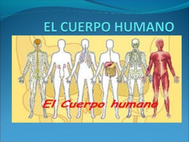 El cuerpo humano es la estructura física y material del  ser humano. Un adulto tiene 208 huesos , mientras  que el de un r...