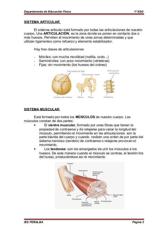 Si duele de la parte izquierda bajo la espátula por parte de la espalda