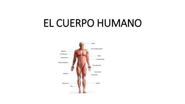 el-cuerpo-humano-1-638.jpg?cb=1467685606
