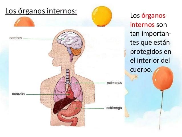 El cuerpo humano conocimiento del medio primaria - Interior cuerpo humano organos ...