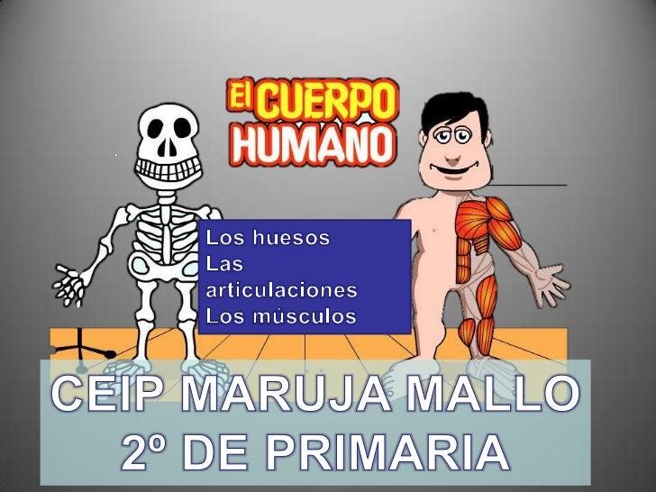 Los huesos<br />Las articulaciones<br />Los músculos<br />CEIP MARUJA MALLO<br />2º DE PRIMARIA<br />
