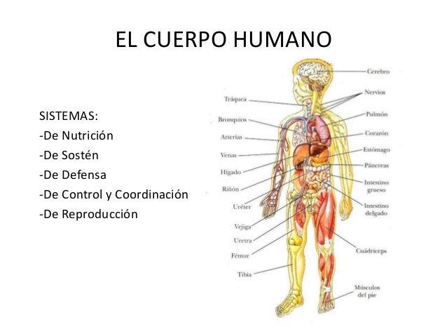 El cuerpo humano osteo artro-muscular