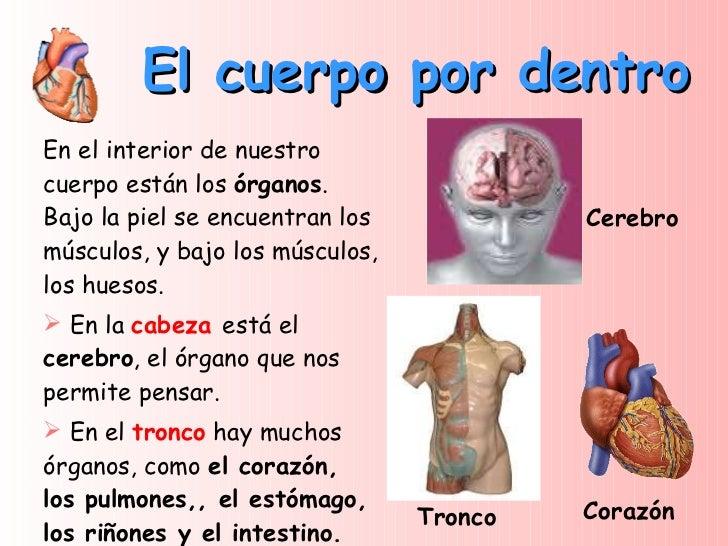 El cuerpo humano unidad 1 - Interior cuerpo humano organos ...
