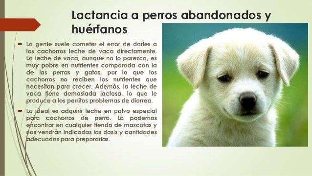 Cuidado de cachorros - Cuando se puede banar a un cachorro ...