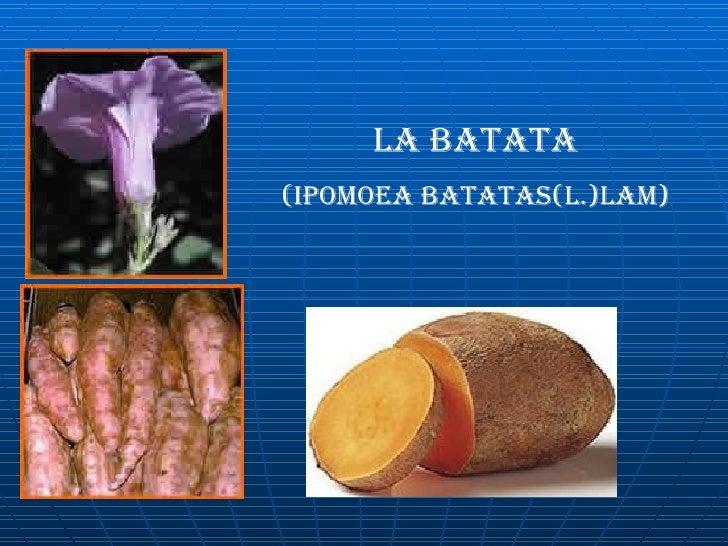 LA BATATA (ipomoea batatas(L.)lam)