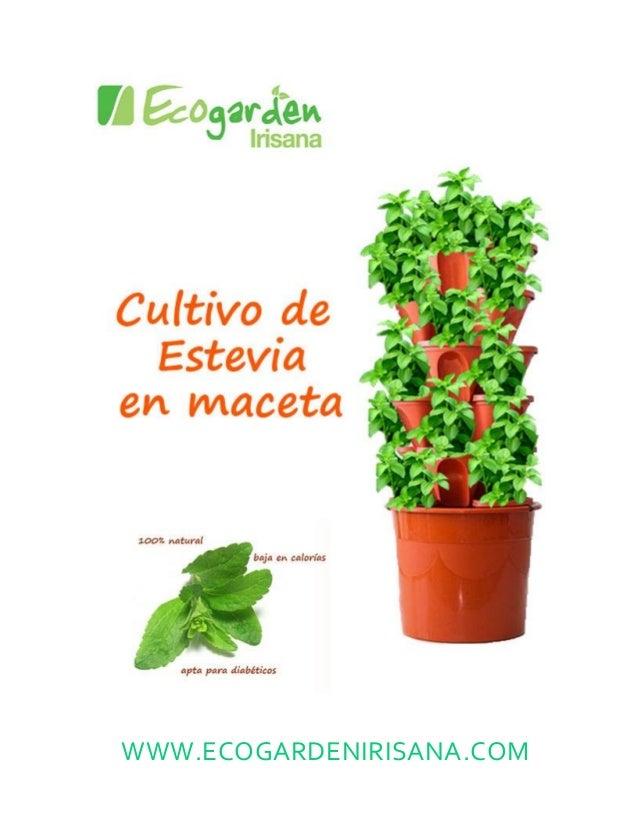 El cultivo de la estevia en maceta - Poda de hortensias en maceta ...