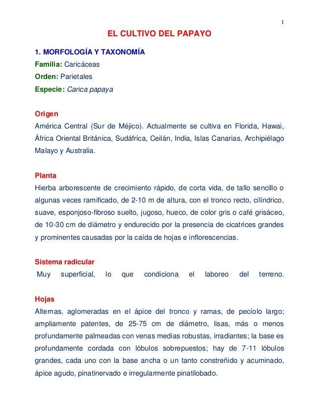 1 EL CULTIVO DEL PAPAYO 1. MORFOLOGÍA Y TAXONOMÍA Familia: Caricáceas Orden: Parietales Especie: Carica papaya Origen Amér...