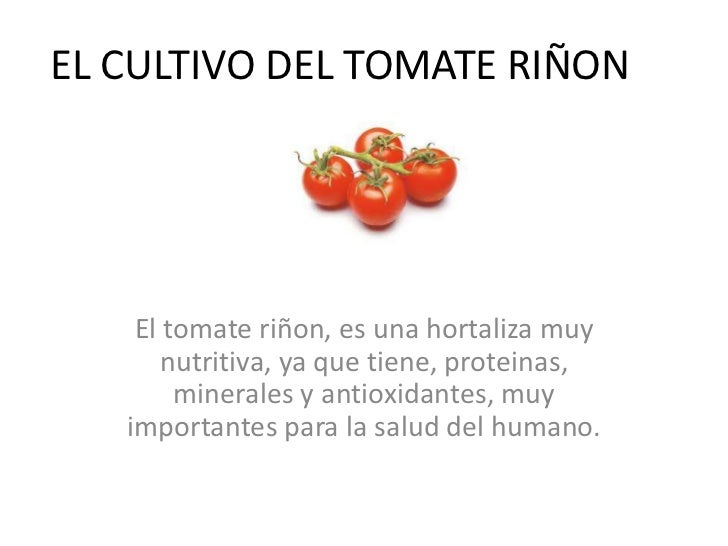 EL CULTIVO DEL TOMATE RIÑON    El tomate riñon, es una hortaliza muy       nutritiva, ya que tiene, proteinas,        mine...