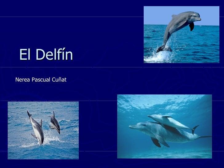 El Delfín Nerea Pascual Cuñat