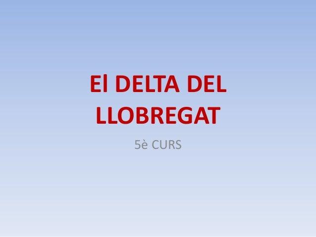 El DELTA DELLLOBREGAT5è CURS