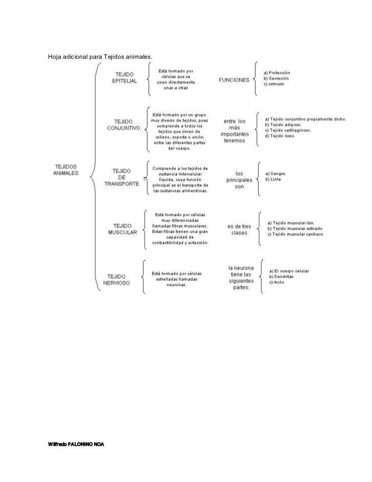 Lujo Sistema Muscular Diagrama De Hoja De Cálculo Regalo - Imágenes ...