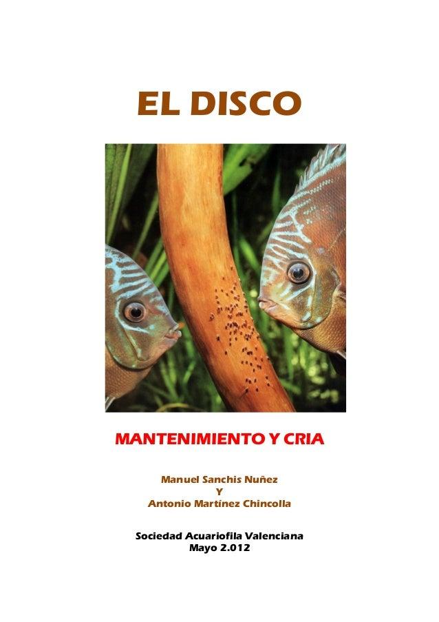 EL DISCO MANTENIMIENTO Y CRIA Manuel Sanchis Nuñez Y Antonio Martínez Chincolla Sociedad Acuariofila Valenciana Mayo 2.012