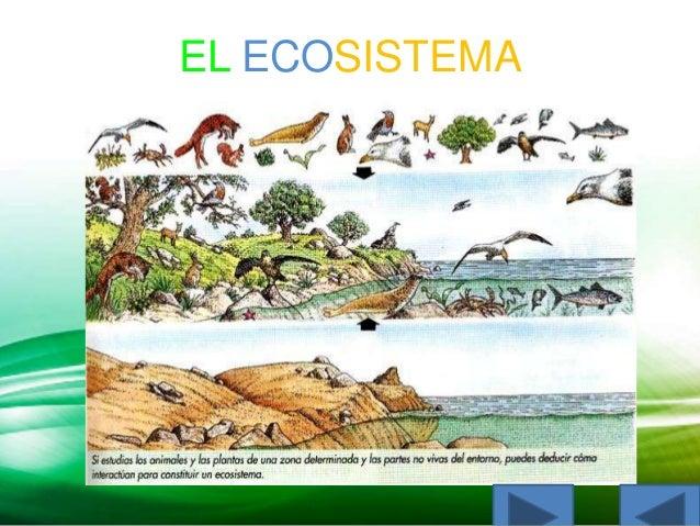 El ecosistema jeissel maria muegues bermudez Slide 2