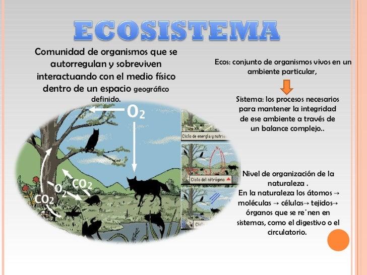 El ecosistema y su Estructura