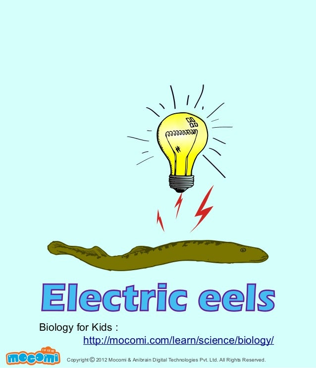 Electric eels  Biology for Kids : http://mocomi.com/learn/science/biology/ F UN FOR ME!  Copyright © 2012 Mocomi & Anibrai...