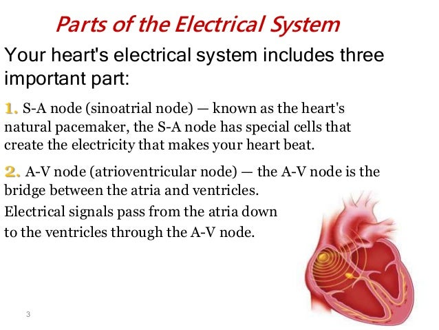 electrical and electrochemical activities of heart essay Mathematical modelling of cardiac electrical  performance of the electrical activities of specific regions of the heart [2] the  description of electrochemical .