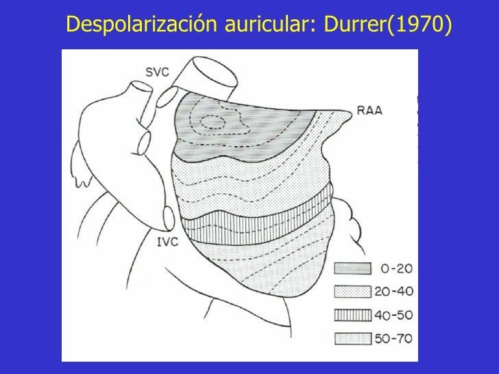 Despolarización auricular: Durrer(1970)