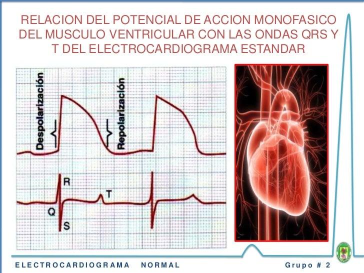 Resultado de imagen para Potencial de acción monofásico de una fibra muscular ventricular durante la función cardíaca normal.