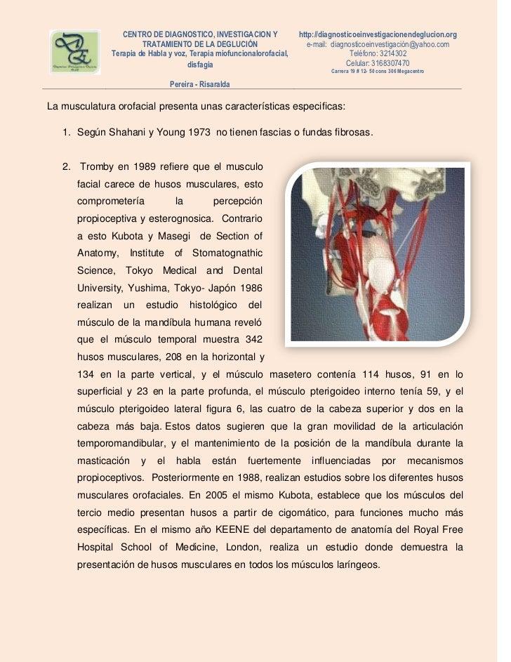 Único Terapia Anatomía Www Org Fotos - Imágenes de Anatomía Humana ...