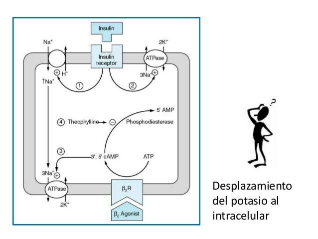 Desplazamiento del potasio al intracelular