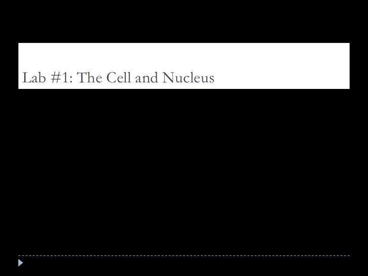 Lab #1: The Cell and Nucleus