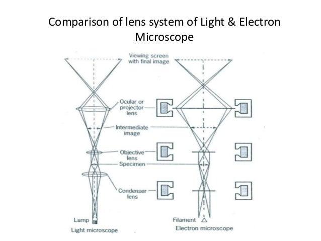 Electron microscopy comparison of lens system of light electron microscope 15 ccuart Choice Image