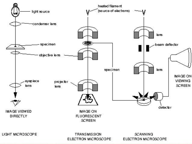 ELECTRON MICROSCOPY PRINCIPLE EBOOK