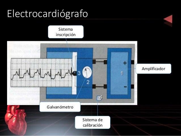 Electrocardiógrafo Amplificador Galvanómetro Sistema inscripción Sistema de calibración