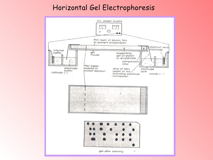 2d gel electrophoresis essay Gel electrophoresis (dige) has proved to be a most powerful and exciting  63 5 summary of key differences between minimal labeling and saturation.