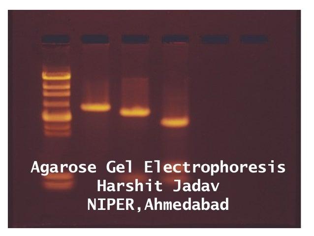 Agarose Gel Electrophoresis Harshit Jadav NIPER,Ahmedabad