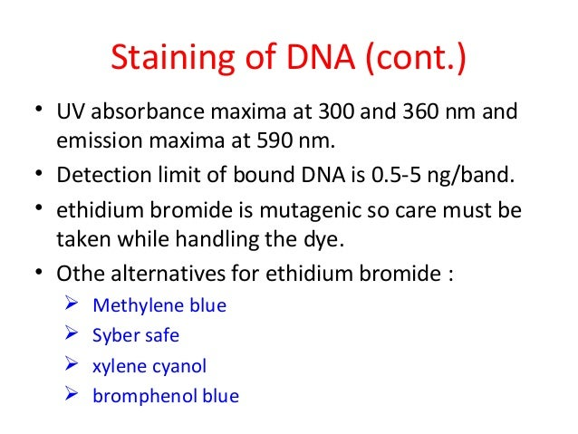 Staining of DNA (cont.) • UV absorbance maxima at 300 and 360 nm and emission maxima at 590 nm. • Detection limit of bound...