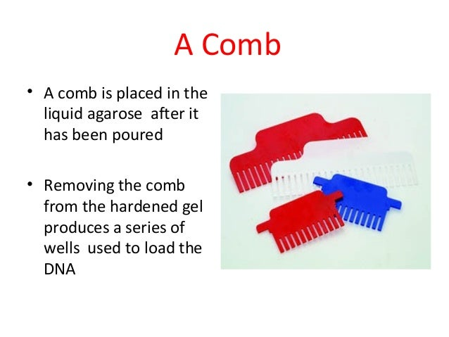 A Comb • A comb is placed in the liquid agarose after it has been poured • Removing the comb from the hardened gel produce...