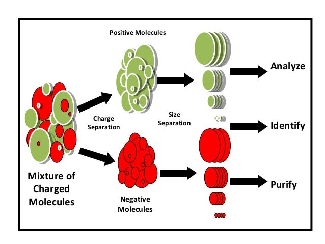 Charge Separation Size Separation Analyze Identify Purify Mixture of Charged Molecules Positive Molecules Negative Molecul...