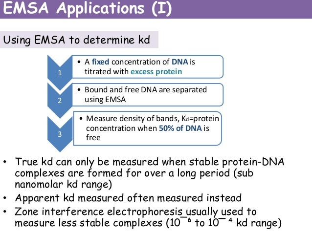 ELECTROPHORETIC MOBILITY SHIFT ASSAY: A Method for Analysing Protein-DNA Interactions