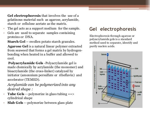 dna electropherises essay Ap® biology 2007 scoring guidelines question 4 a bacterial plasmid is 100 kb in length the plasmid dna was digested to completion with two restriction.