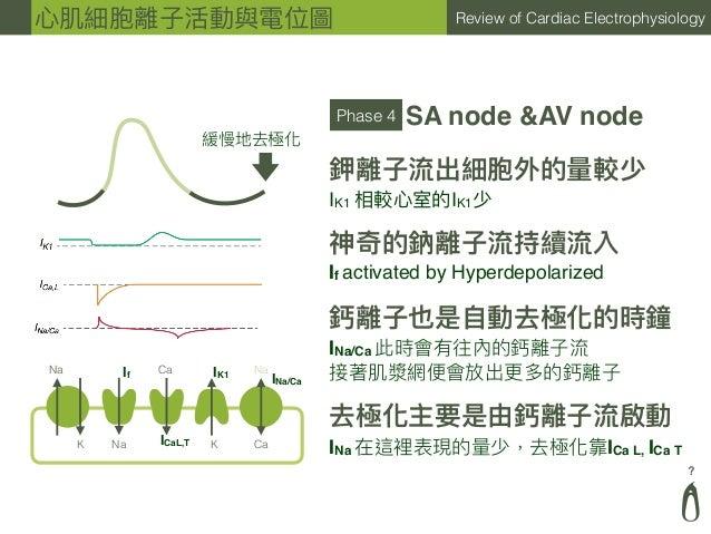 ? Review of Cardiac Electrophysiology Phase 4 SA node &AV node IK1 相較⼼心室的IK1少 鉀離⼦子流出細胞外的量量較少 神奇的鈉離⼦子流持續流入 If activated by ...