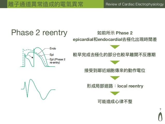 ? Review of Cardiac Electrophysiology Phase 2 reentry 如前所⽰示 Phase 2 epicardial和endocardial去極化出現時間差 較早完成去極化的部分也較早離開不反應期 接受到...