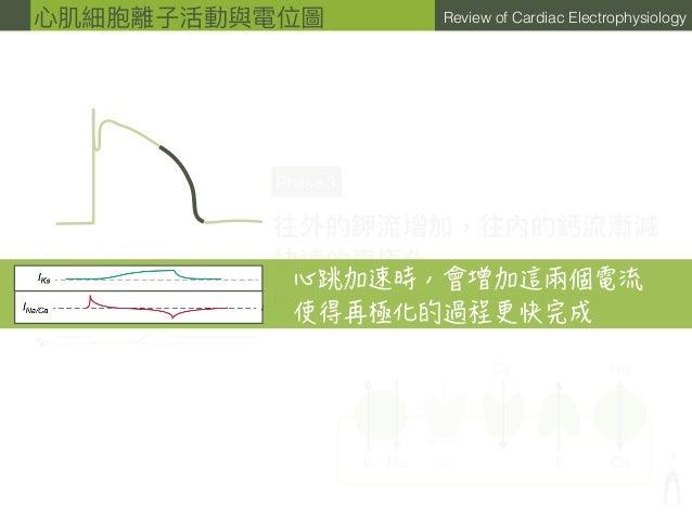 ? Review of Cardiac Electrophysiology Na Na Na Ca CaKK Phase 3 往外的鉀流增加,往內的鈣流漸減 快速的再極化 IK1: inward rectier K current 貢獻⼤大部分...