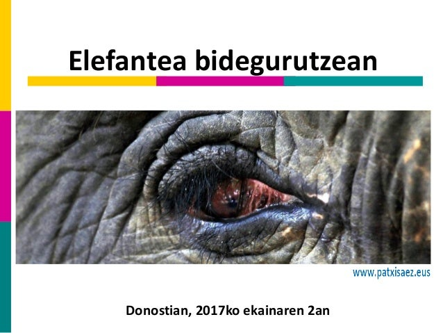 Elefantea bidegurutzean Donostian, 2017ko ekainaren 2an