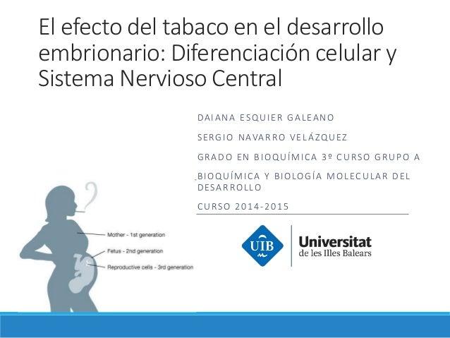 El efecto del tabaco en el desarrollo embrionario: Diferenciación celular y Sistema Nervioso Central DAIANA ESQUIER GALEAN...