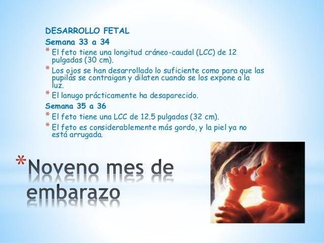Las ocupaciones para el adelgazamiento para los vídeos embarazados