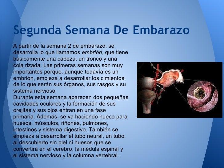 El dolor en la articulación tibiotarsiana y la espalda